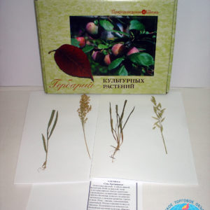 Гербарий Культурные растения
