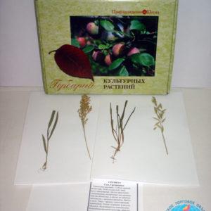 Гербарий-Культурные-растения-600x600
