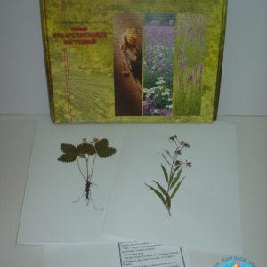 Гербарий Лекарственные растения