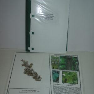 Гербарий Эволюция высших растений