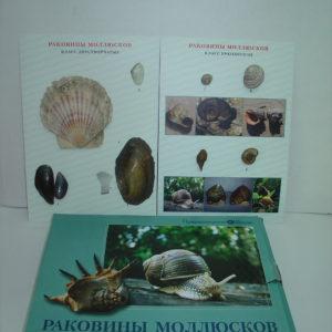 Коллекция Раковины молюсков