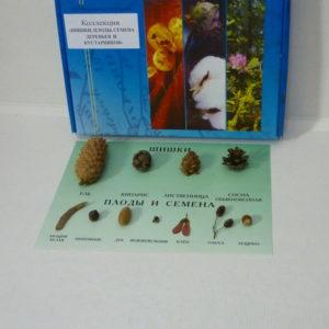 Коллекция Шишки плоды и семена деревьев и кустарников